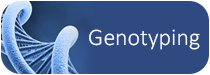 InDevR's Genotyping Applications